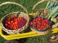 Bellingham Country Gardens - freshly picked