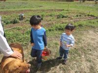 Bellingham Country Gardens - kids picking