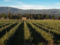 Wish Farms - last land farms