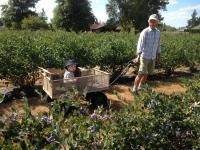 Blue Dot Farm - kid in cart