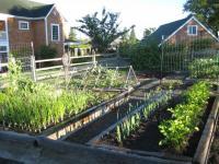 Blue Dot Farm - small garden